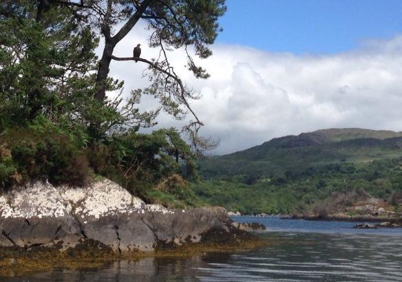 Garinish Island_Glengarriff
